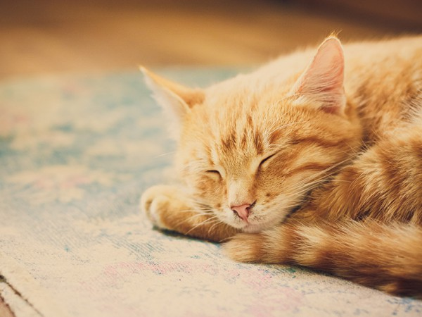 Veterinary Diets For Hyperthyroidism In Cats