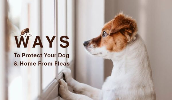 protect your dog from flea and tick