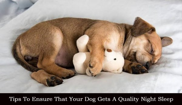 How to improve dog's sleep