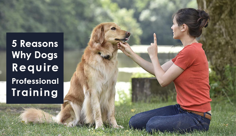 Reasons Dogs require professional Training