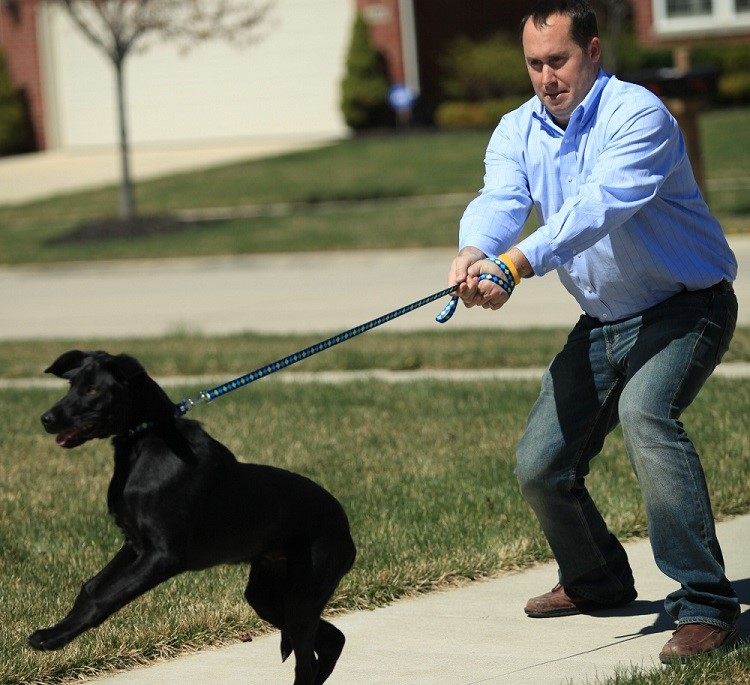 Leash training for Dogs