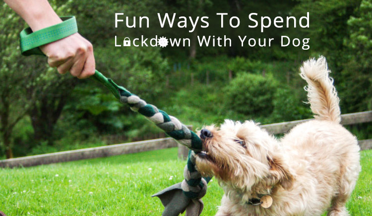 Fun ways to spend lockdown with pets