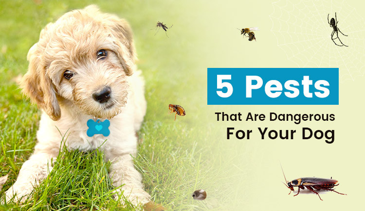 5 PEST that are dangerous