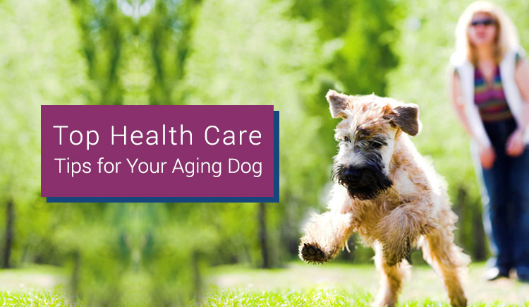 top health care for aging dogs