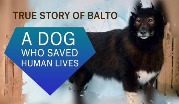 balto dog