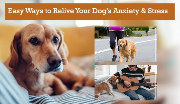 Easy Ways to Relieve Anxiety Stress