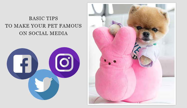 How to make your pet famous