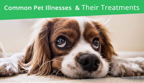 Common Illness and Treatment for Dogs and Cats