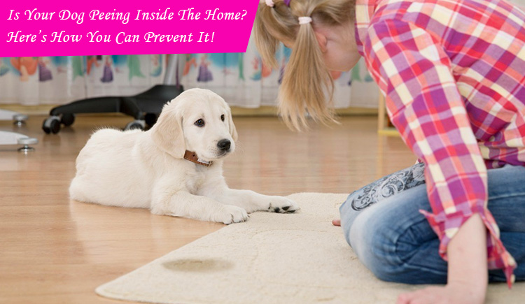 Dog Peeing inside home