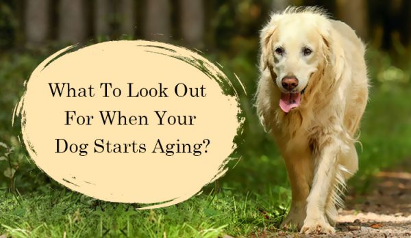 How to take care of aged dogs