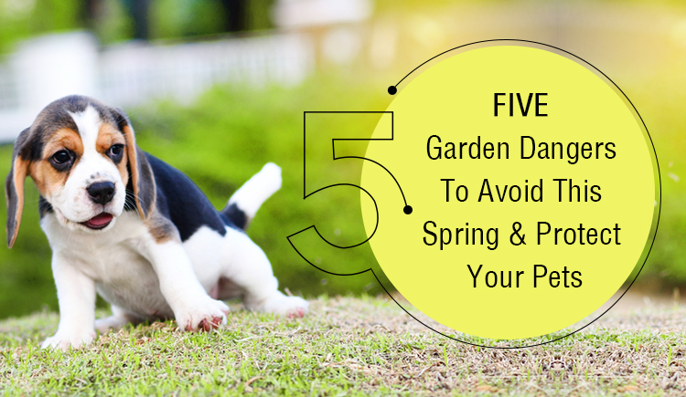 Five Garden dangers for Pets