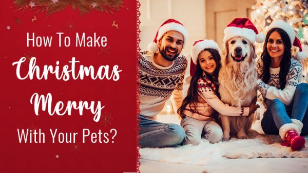 Christmas with pets