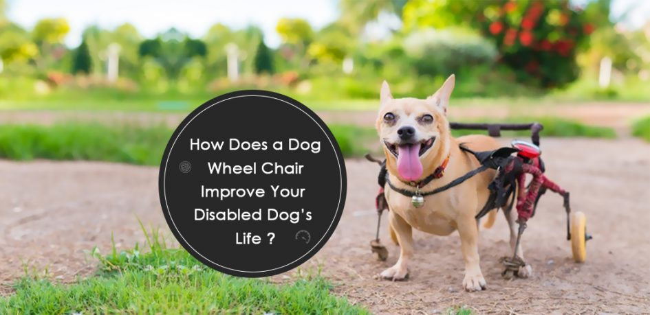 How Does a Dog Wheelchair Improve Your Disabled Dog's Life?