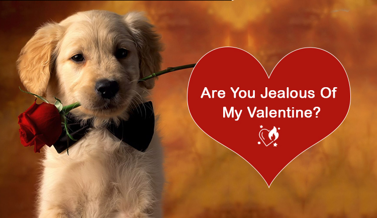 Valentine With pet