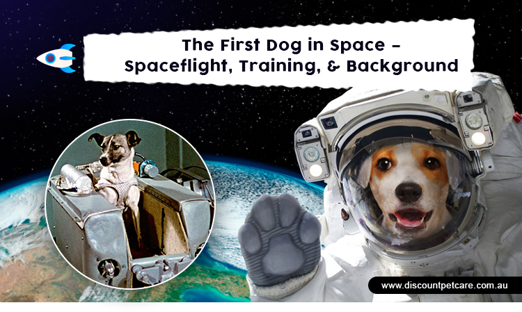 Laika - Dog in Space