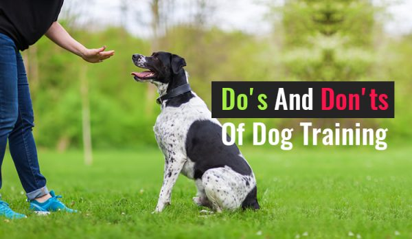 The Do's And Don'ts Of Dog Training