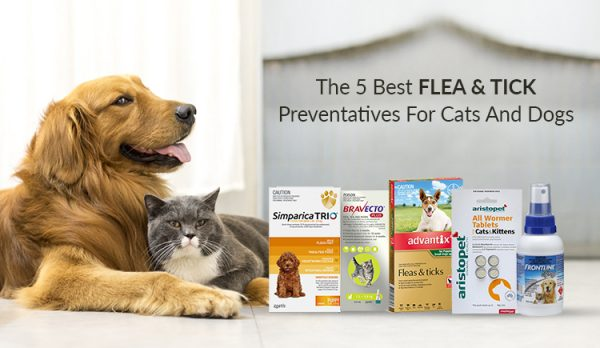 The 5 Best Flea And Tick Preventatives For Cats And Dogs