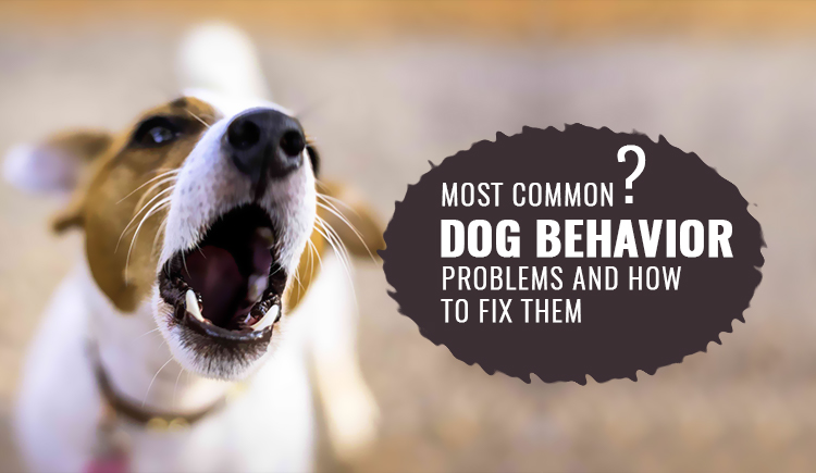 Most Common Dog Behavior Problems and How To Fix Them