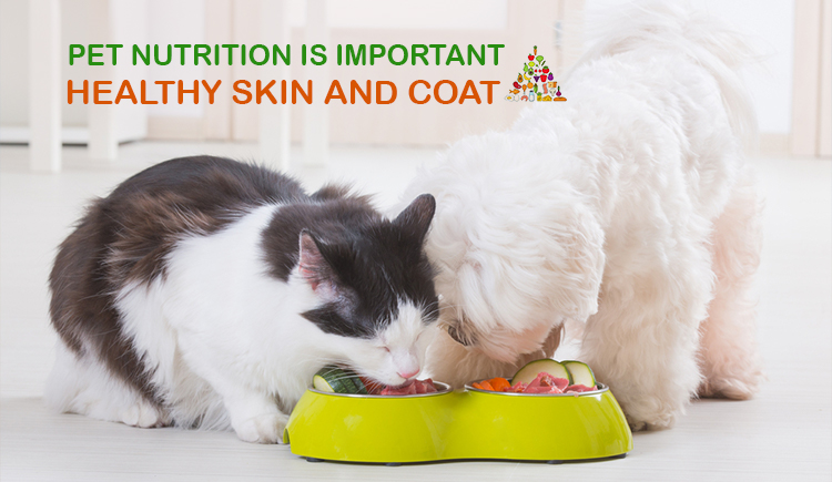 Pet Nutrition Is Important for Healthy Skin and Coat
