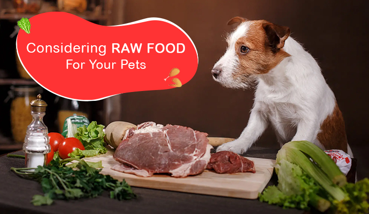 Considering Raw Food for Your Pet