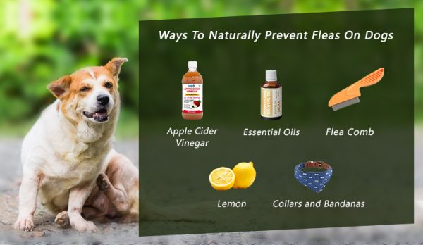 Ways To Naturally Prevent Fleas On Dogs