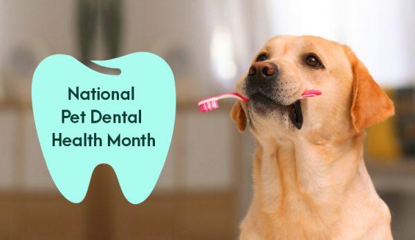 National Pet Dental Health Month: