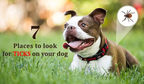 7 Places to look for ticks on your dog